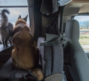 Traveling with Pets
