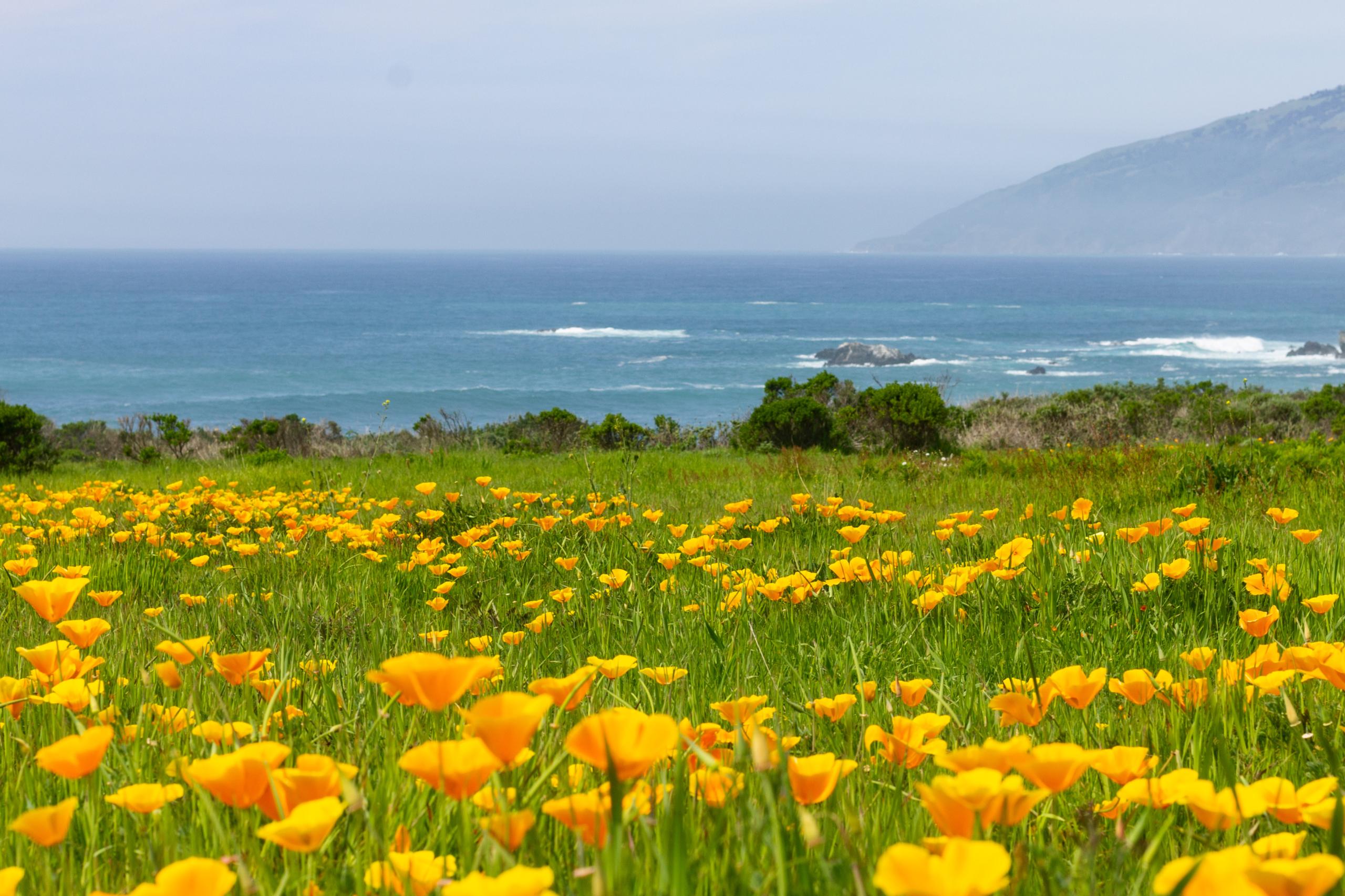 Camp-California Outdoor Principles